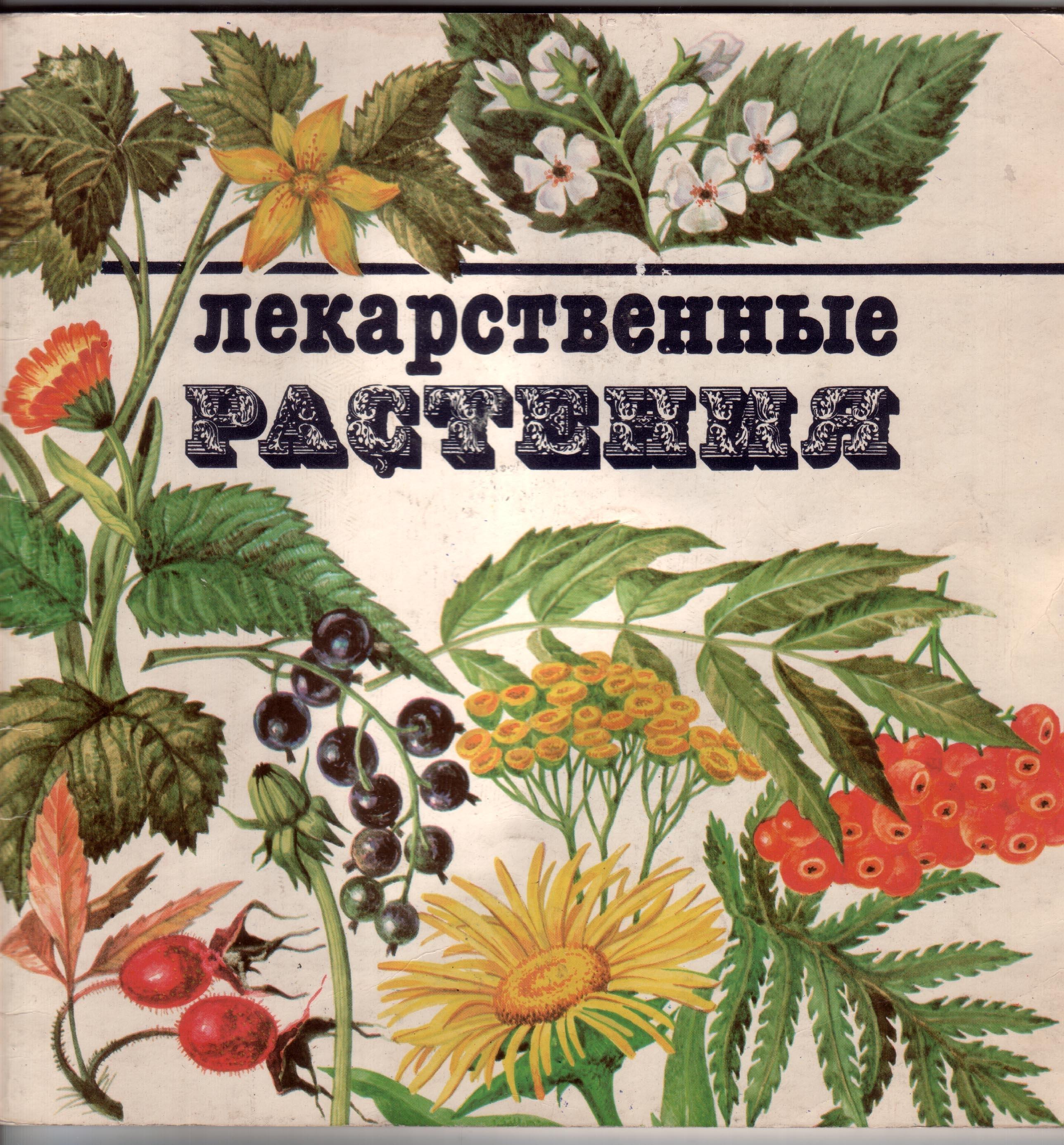 Травы картинки с надписью